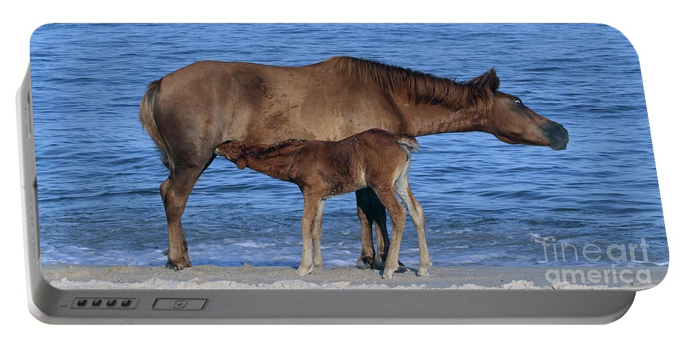Horses Portable Battery Charger featuring the photograph 570a by Timm Andrews