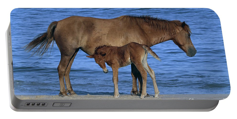 Horses Portable Battery Charger featuring the photograph 575a by Timm Andrews