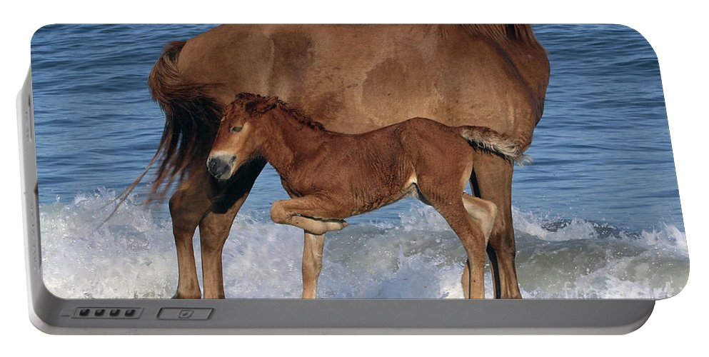 Horses Portable Battery Charger featuring the photograph 578a by Timm Andrews