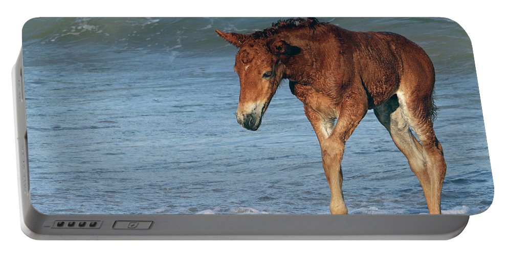 Horses Portable Battery Charger featuring the photograph 593a by Timm Andrews