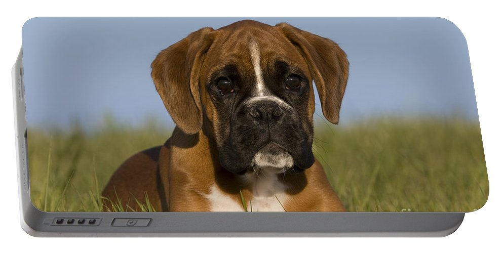 Boxer Portable Battery Charger featuring the photograph Boxer Puppy by Jean-Louis Klein & Marie-Luce Hubert