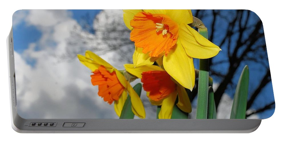 Daffodil Portable Battery Charger featuring the photograph Daffodils by FL collection