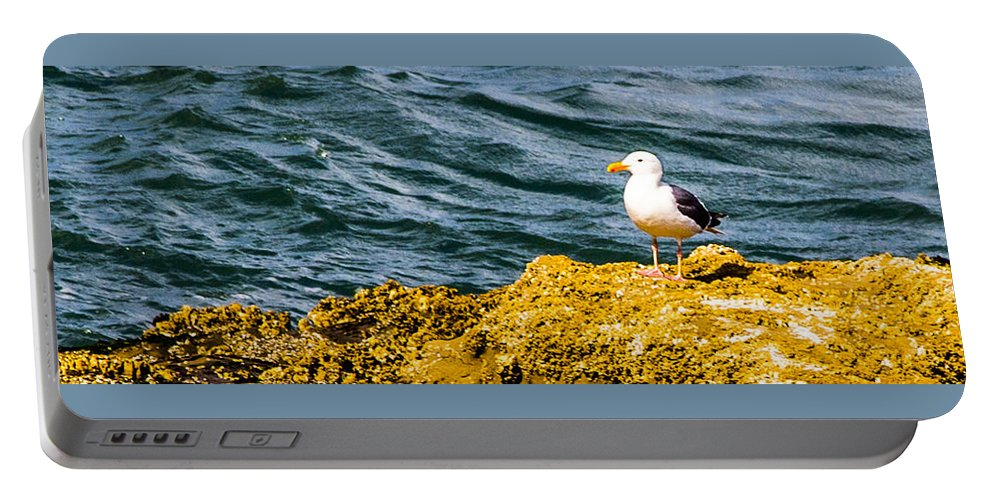 Portable Battery Charger featuring the photograph Sea Birds by Angus Hooper Iii