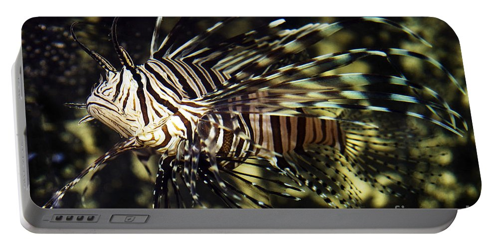 Water Portable Battery Charger featuring the photograph Tropical Fish by Gunnar Orn Arnason