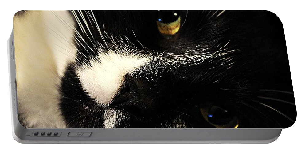 Cat Portable Battery Charger featuring the photograph Cat by FL collection