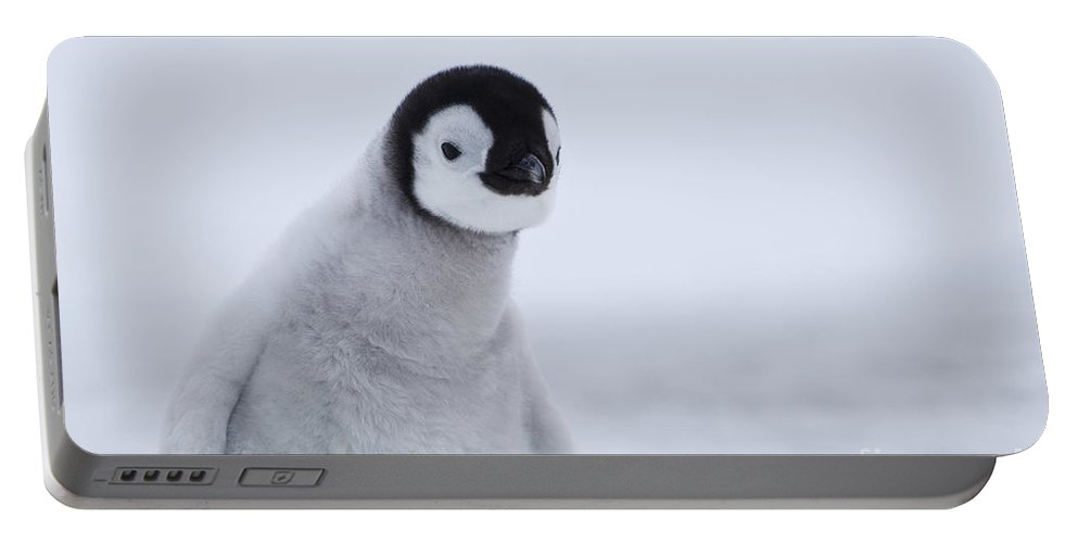 Emperor Penguin Portable Battery Charger featuring the photograph Emperor Penguin Chick by Jean-Louis Klein & Marie-Luce Hubert