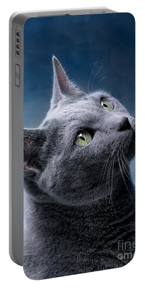 Russian Portable Battery Charger featuring the photograph Russian Blue Cat by Nailia Schwarz