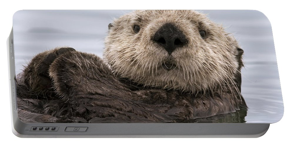 00429873 Portable Battery Charger featuring the photograph Sea Otter Elkhorn Slough Monterey Bay by Sebastian Kennerknecht