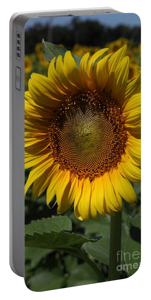 Sunflowers Portable Battery Charger featuring the photograph Sunflower Series by Amanda Barcon