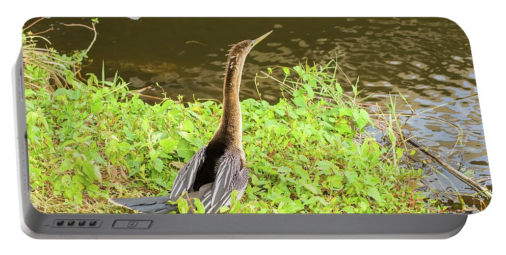 A. Anhinga Portable Battery Charger featuring the photograph Female Anhinga by Rich Leighton