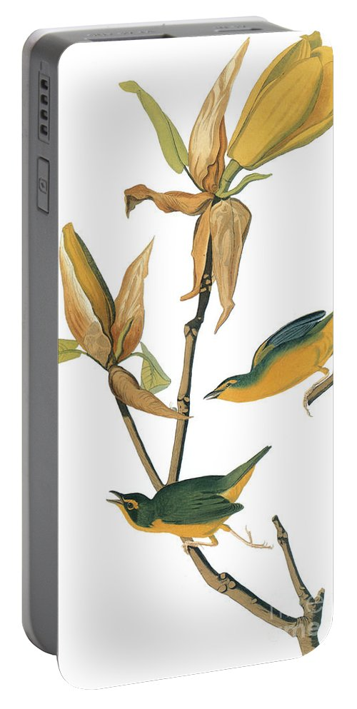 1827 Portable Battery Charger featuring the photograph Audubon: Warbler by Granger