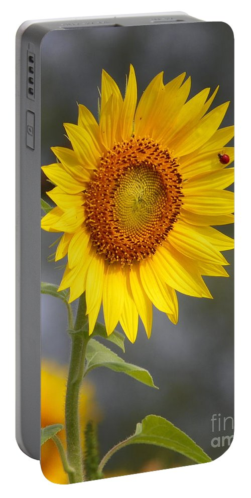 #933 D958 Friends For Life Portable Battery Charger featuring the photograph #933 D958 Best Of Friends Colby Farm Sunflowers Newbury Massachusetts by Robin Lee Mccarthy Photography
