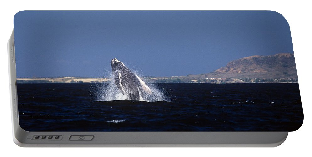 Mammal Portable Battery Charger featuring the photograph A Baby Humped Backed Whale Breeching In Banderous Bay Mexico by John Harmon