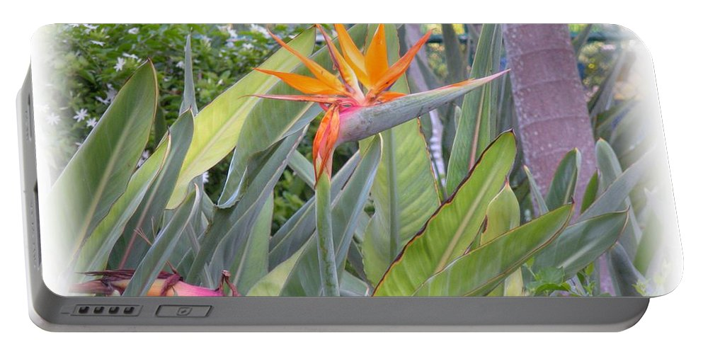 Plant Portable Battery Charger featuring the photograph A Bird In Paradise by Maria Bonnier-Perez