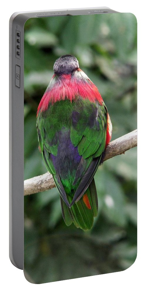 Bird Portable Battery Charger featuring the photograph A Bird's Perspective by Amy Fose