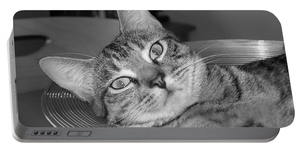 Cat Portable Battery Charger featuring the photograph A Bowl Of Ginger by Maria Bonnier-Perez