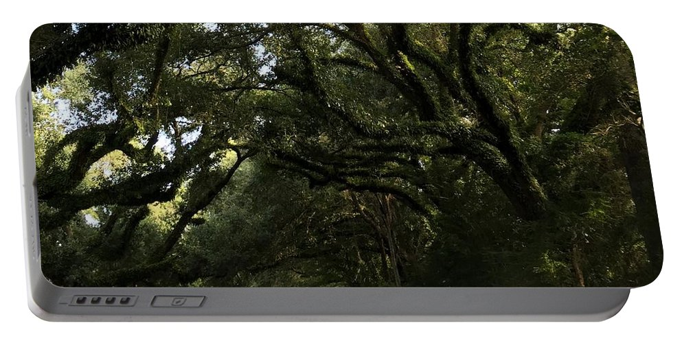 Oak Trees Portable Battery Charger featuring the photograph A Canopy Of Trees by Kathy Kirkland