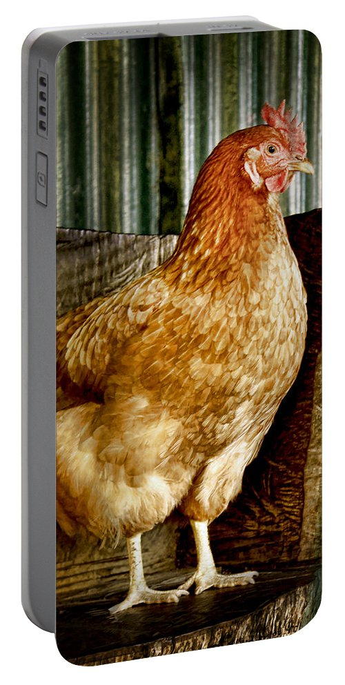 Animals Portable Battery Charger featuring the photograph A Chicken Named Rembrandt by Holly Kempe