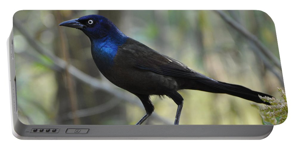 Birds Portable Battery Charger featuring the photograph A Clever Thief by Jan Amiss Photography