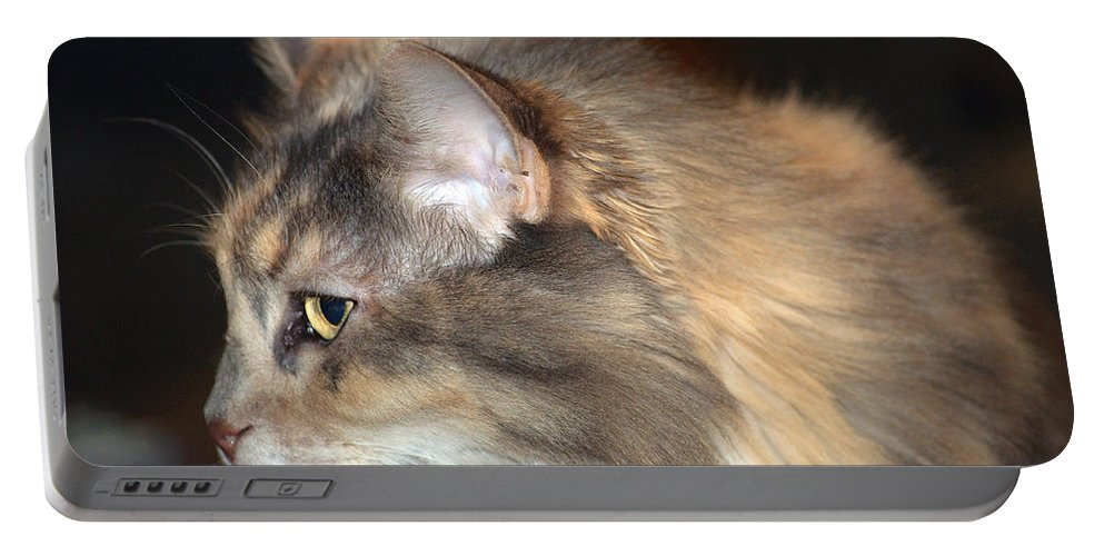 Cat Portable Battery Charger featuring the photograph A Contemplative Little Princess by Kenneth Albin