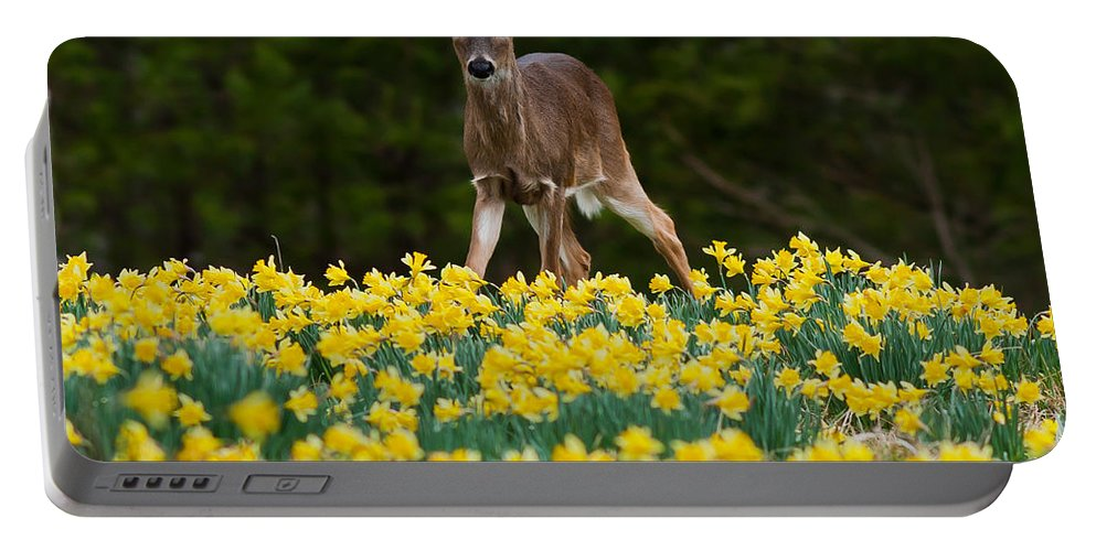 Doe Portable Battery Charger featuring the photograph A Deer And Daffodils IIi by Douglas Stucky