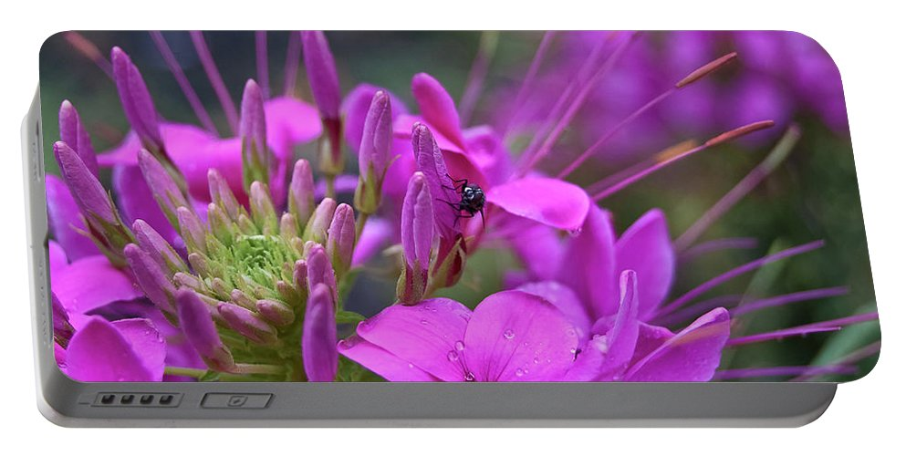 Fly Portable Battery Charger featuring the photograph A Fly And A Flower by DigiArt Diaries by Vicky B Fuller