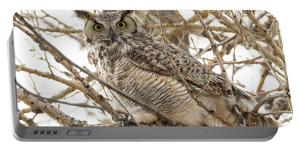 Owl Portable Battery Charger featuring the photograph A Great Horned Owl's Wide Eyes by Tony Hake