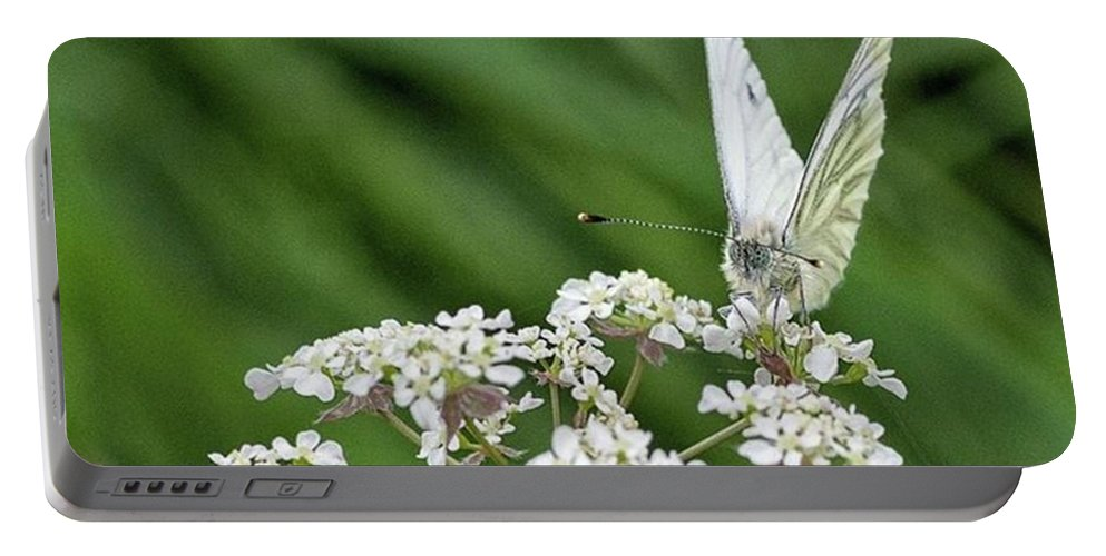 Insectsofinstagram Portable Battery Charger featuring the photograph A Green-veined White (pieris Napi) by John Edwards