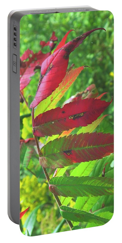 Leaves Portable Battery Charger featuring the photograph A Hard Tough Summer by Ian MacDonald