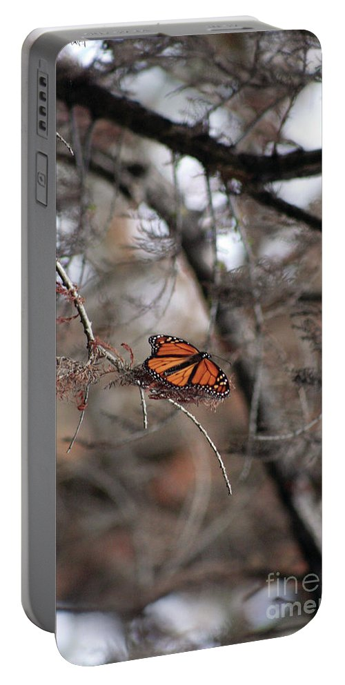 Monarch Portable Battery Charger featuring the photograph A Monarch For Granny by Alycia Christine