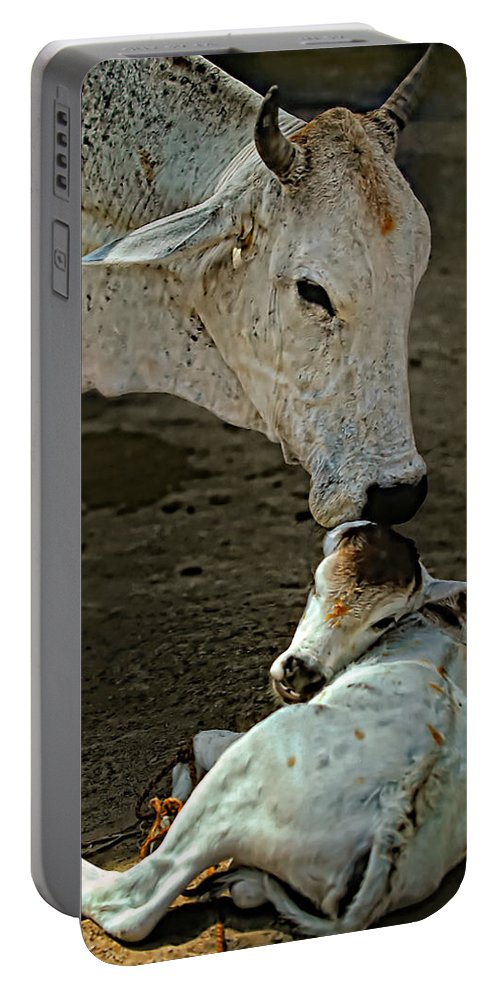 Cow Portable Battery Charger featuring the photograph A Mother's Love by Steve Harrington