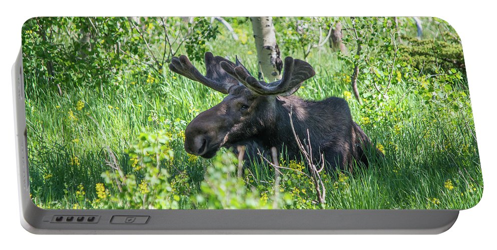 Moose Portable Battery Charger featuring the photograph A Nap In The Grass by David F Hunter