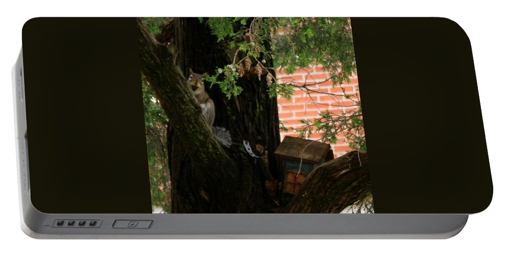 Squirrel Portable Battery Charger featuring the photograph A Nut by Sherri Williams