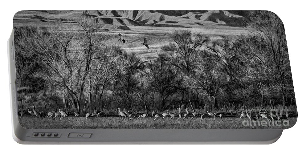 A Sedge Of Sandhill Cranes Portable Battery Charger featuring the photograph A Sedge Of Sandhill Cranes by Priscilla Burgers
