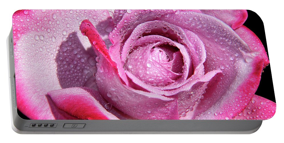 Sweet Rose Portable Battery Charger featuring the photograph A Sweet Sweet Rose by Mariola Bitner