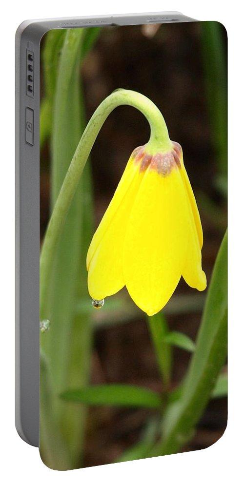 Flower Portable Battery Charger featuring the photograph A Yellow Bell's Tear by DeeLon Merritt