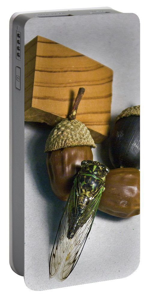 Acrpm Portable Battery Charger featuring the photograph Acrons And Cicada by Douglas Barnett