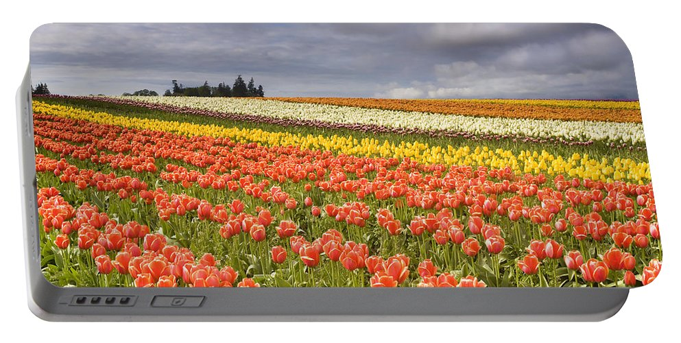 Tulips Portable Battery Charger featuring the photograph Across Colorful Fields by Mike Dawson