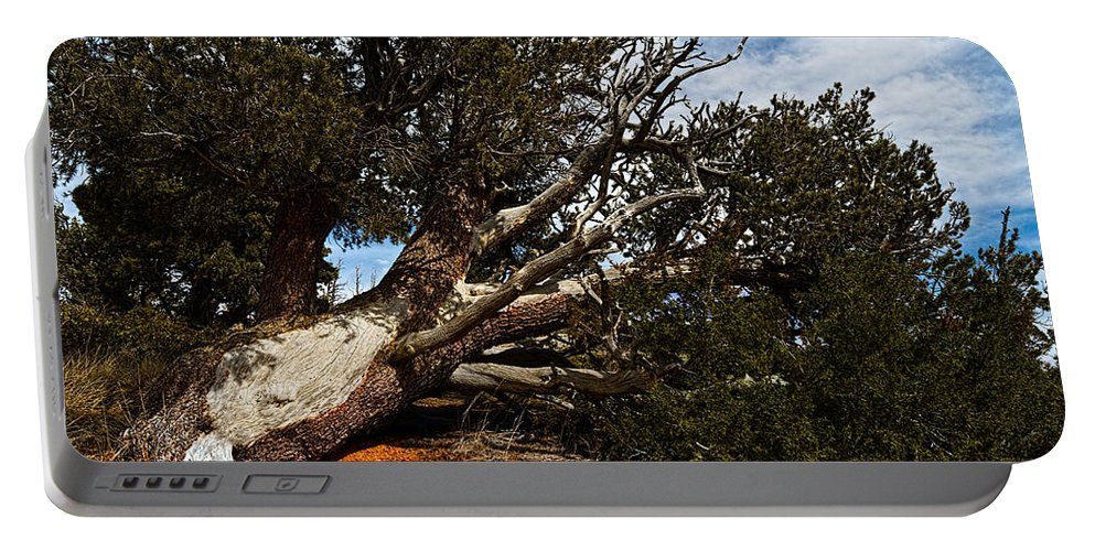 Nature Portable Battery Charger featuring the photograph Across The Path by Christopher Holmes