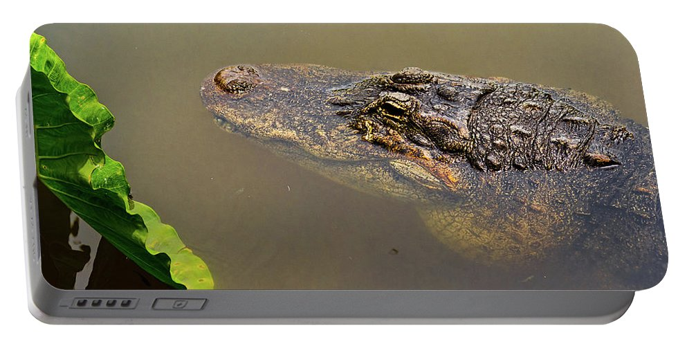 Alligator Portable Battery Charger featuring the photograph Admiring The Leaf by Christopher Holmes