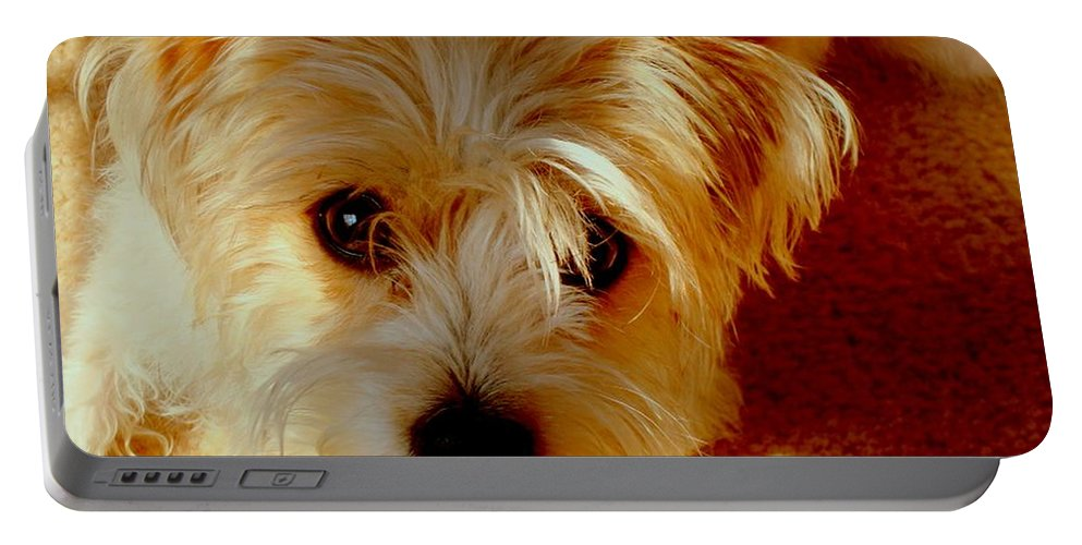 Dog Portable Battery Charger featuring the photograph Adorable Daisy by Arlane Crump