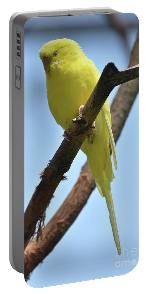 Budgie Portable Battery Charger featuring the photograph Adorable Little Yellow Parakeet In A Tree by DejaVu Designs
