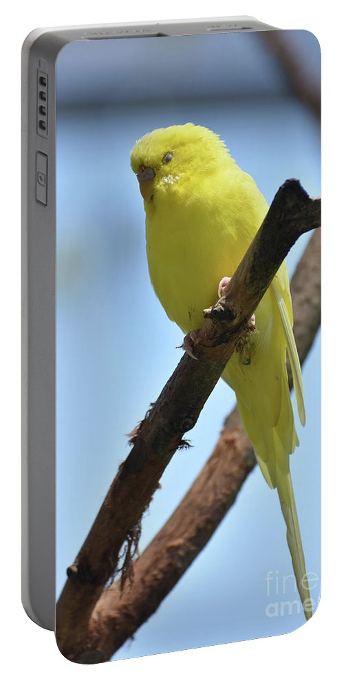 Budgie Portable Battery Charger featuring the photograph Adorable Yellow Parakeet Resting In A Tree by DejaVu Designs