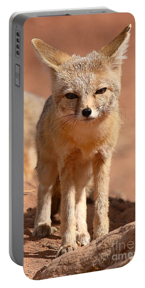 Fox Portable Battery Charger featuring the photograph Adult Kit Fox Ears And All by Max Allen