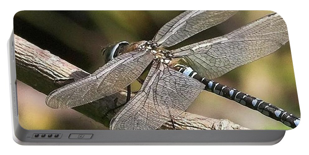 Dragonfly Portable Battery Charger featuring the photograph Aeshna Juncea - Common Hawker taken At by John Edwards