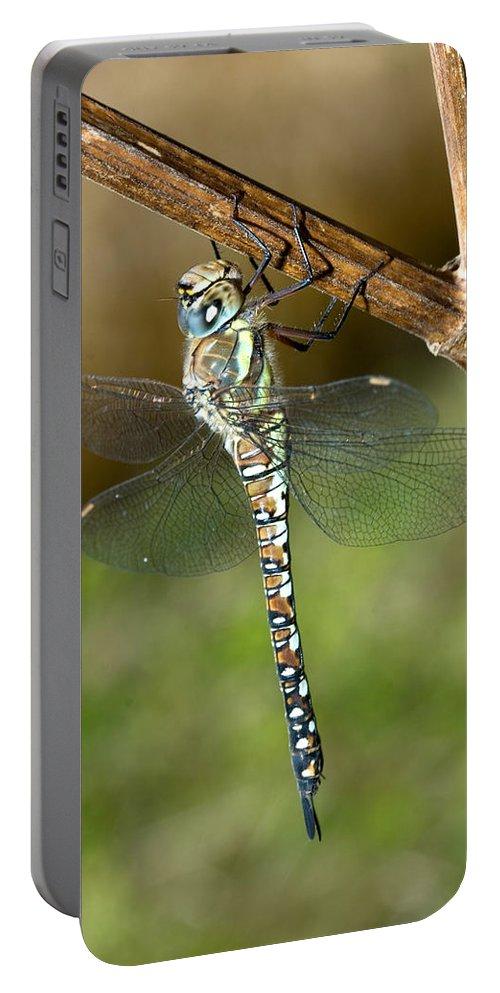 Aeshna Mixta Portable Battery Charger featuring the photograph Aeshna Mixta Dragonfly by Bob Kemp