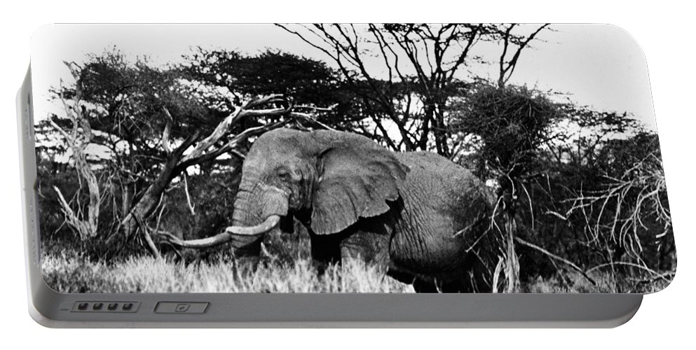 20th Century Portable Battery Charger featuring the photograph African Elephant by Granger