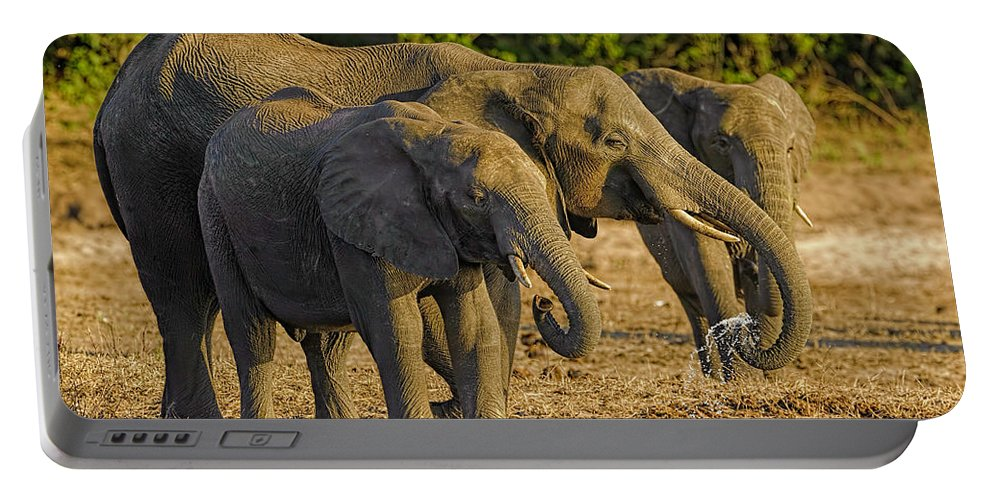 01-animal Portable Battery Charger featuring the photograph African Elephant by Myer Bornstein