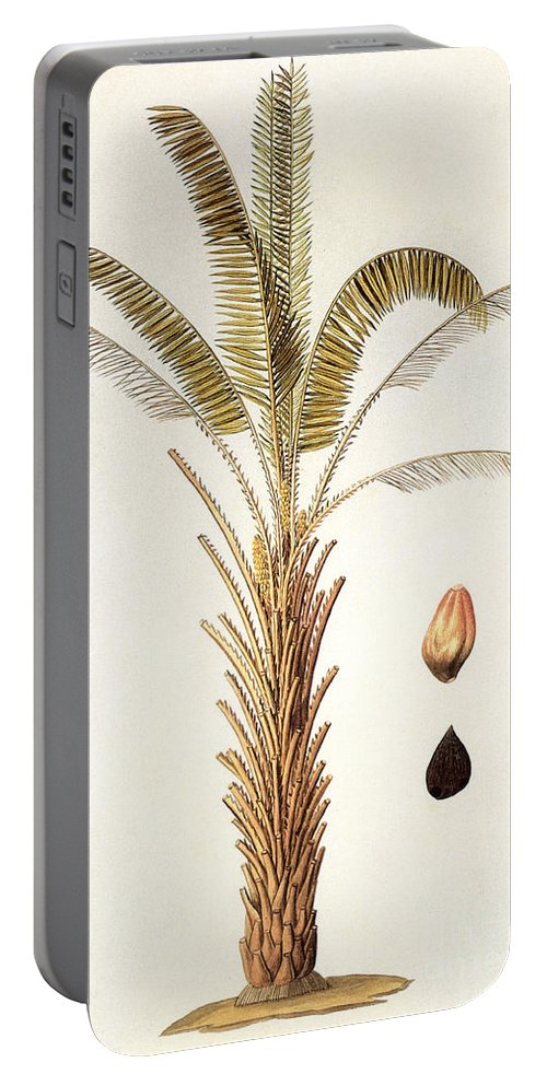 1780 Portable Battery Charger featuring the photograph African Oil Palm by Granger