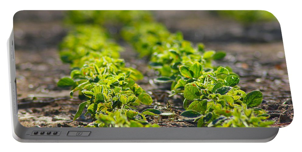 Crop Portable Battery Charger featuring the photograph Agriculture- Soybeans 1 by Karen Wagner